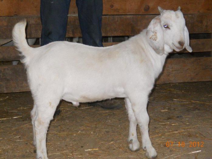GS Commander born 5/2/2012 Birth Wt: 8lb 8 oz Twin