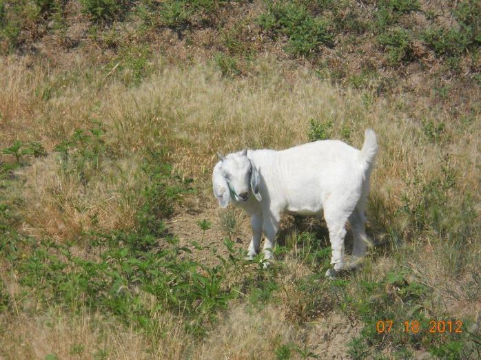GS Caesar born 5/8/2012 Birth Wt: 4lb 4oz Triplet